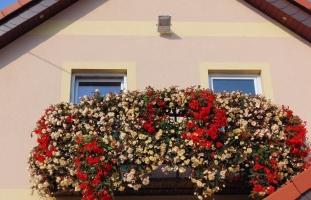 Balkonowe i rabatowe